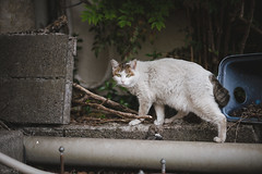 猫 (fumi*23) Tags: ilce7rm3 sony sel55f18z 55mm sonnartfe55mmf18za a7r3 animal alley cat gato katze neko ねこ 猫 ソニー