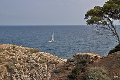 S'Agaró (svet.llum) Tags: sagaró catalunya cataluña paisaje paisatge verano mar pino agua mediterráneo