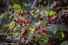 20190825-2997-Braam-bw (Rob_Boon) Tags: braam eyserbos macro on1 plant robboon