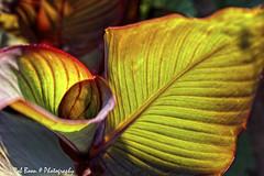20190825-2958-Blad-bw (Rob_Boon) Tags: blad macro on1 plant tegenlicht wijlre robboon
