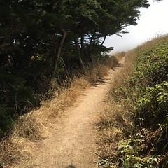 Chimney Rock Trail....disappearing into the fog! (birdgal5) Tags: chimneyrocktrail pointreyesnationalseashore pointreyesns marincounty california iphone6s squareformat