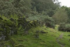 TransitionGreen (Tony Tooth) Tags: nikon d600 sigma 70mm footpath pathway stonewall green greenery moorland danebridge staffs staffordshire staffordshiremoorlands england evening