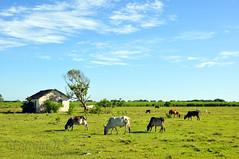 Ah... o campo... (GFerreiraJr ®) Tags: brasil brazil nikon d90 nikond90 brasilemimagens gferreirajr flickraward micámarayyo nationalgeographic nikonflickraward flickrunitedaward touraroundtheworld panoramafotográfico gettyimages sãojoãodabarrarj sãojoãodabarra rj