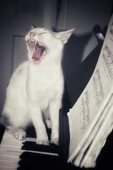Cat music! (Praveen Banneka) Tags: cat nostaligia nostalgic piano music keys black white yawn blacknwhite blackandwhite srilanka asia southasia cute notation opera song singing catmusic