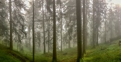 Misty mountain forest on Nußlberg near Kiefersfelden, Bavaria, Germany (UweBKK (α 77 on )) Tags: nuslberg nusslberg mist misty fog mountain forest grey green tree panorama panoramic eery eerie kiefersfelden bavaria bayern germany deutschland iphone europe europa