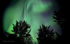 August Lights (Katy on the Tundra) Tags: northernlights auroraborealis nightsky