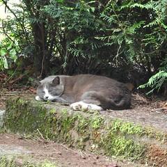 Ce jour-là, j'ai rencontré... un chat très occupé (claudiemenoud) Tags: ✔ animaux nature chats cats