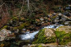 Cerca del agua (SantiMB.Photos) Tags: 2blog 2tumblr 2ig artigadelin esbòrdes valldaran valdaran pirineos pyrenees lleida otoño autumn río river joèu forest bosque geo:lat=4268469381 geo:lon=070931830 geotagged bordeses cataluna españa