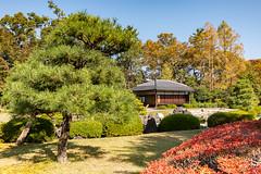 2018-11-11 - 12.20.16 - 5D4_0689 - 1 (Rossell' Art) Tags: château japon kyoto nijo nijojo