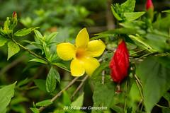 Sri Lanka. (javiercamporbin) Tags: srilanka kandy jardinbotanico