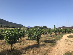 Paseando entre viñedos (eitb.eus) Tags: eitbcom 16599 g153744 tiemponaturaleza tiempon2019 nafarroa ayegui josemariavega