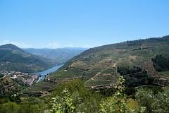 Vineyards.............druivenranken (atsjebosma) Tags: river duoro pinhao portugal druivenranken wijn vin summer atsjebosma mountains bergen trees bomen july juli landschap coth5