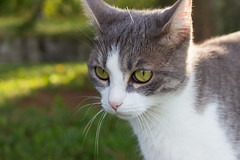 Cat's eyes (docteurTonTon) Tags: cat eyes chat yeux portrait natural light docteur tonton docteurtonton animals animal