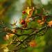 autumnal activity