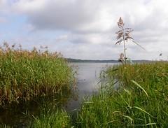 Juglas Lake (galterrashulc) Tags: juglas lake irina galitskaya galterrashulc jugla rīga latvija latvia riga lettland landscape nature flora grass summer water clouds sky forest beach