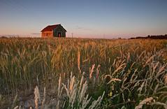 La casita de Hansel y Gretel (pascual 53) Tags: canon eos5ds ocaso caseta navarra corella puestadesol trigo cereal largaexpo 1635mm