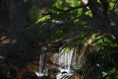 Let it flow (Dreaming of the Sea) Tags: waterfall ferns nikond7200 nikkor nikkor18140mm smileonsaturday shadow depthoffield dof rocks greenleaves letitflow liquid