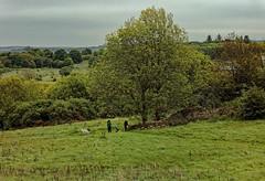 Edinburgh / Craigmillar Castle / Country (Pantchoa) Tags: édimbourg ecosse craigmillar château environs campagne nature arbres herbe prairie nuages personnes chiens vuedepuislechâteau paysage panorama