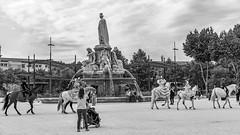 Promenade équestre... (Xtian du Gard) Tags: xtiandugard nb bw esplanade nîmes fontaine gard france chevaux horses cavalière défilé elrocio 16x9