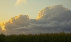 Boom (Matt Champlin) Tags: weekend storm storms beautiful august summer corn farm fields harvest change fall autumn september clouds weather life nature outdoors canon 2019