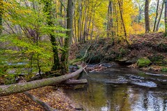 Autumn is coming (FVillalpando) Tags: river autumn trees water landscape light ngysa