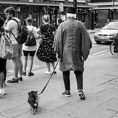 IMG_11 (Kathi Huidobro) Tags: chihuahua fez kimono londonstyle londoncharacters reportage streetphotography candid urbanscene urban citylife londonlife eastlondon londoners london dog dogwalk blackwhite bw monochrome