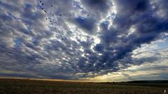 PAYSAGES DE PICARDIE 127 (aittouarsalain) Tags: picardie landsacpa paysage vol oiseaux pigeons champ campagne nature ciel nuages aurore aube rayonsdesoleil