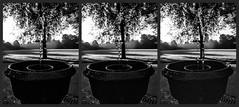 Sluitertijd - Shutter speed (naturum) Tags: 2019 amsterdam blackandwhite blackwhite bw drop druppel geo:lat=5235975542 geo:lon=491728656 geotagged happertje holland nederland netherlands oosterpark summer water zomer zw zwartwit