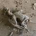 Dead bird on the floor
