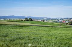 Oasis (SantiMB.Photos) Tags: 2blog 2tumblr 2ig gallecs mollet vallèsoccidental vallès primavera spring campos fields trigo wheat geo:lat=4155209445 geo:lon=219269027 geotagged molletdelvalles cataluna españa