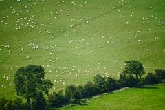Co. Meath (Mark Waldron) Tags: meath ireland green field trees sheep mto 500mm mirrortele soviet vintage lens sony a7iii