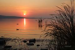 (zedspics) Tags: balaton magyarország hungary hongarije sunrise zedspics 1908 nature
