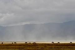 Ngorongoro Crater - Tanzania (Silvia Sagone) Tags: ngorongoro tanzania africa landscape gnu