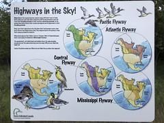 Highways in the sky (octothorpe enthusiast) Tags: saskatoon saskatchewan chappellmarshconservationarea