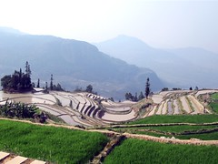 Qingkou Rice Terraces (D-Stanley) Tags: qingkou hani yunnan china yuanyang riceterraces