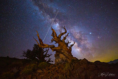 Heaven and Earth (Mimi Ditchie) Tags: bristleconepine milkyway astrophotography night meteor meteors tree stars lightpainting bristleconepineforest starrynight