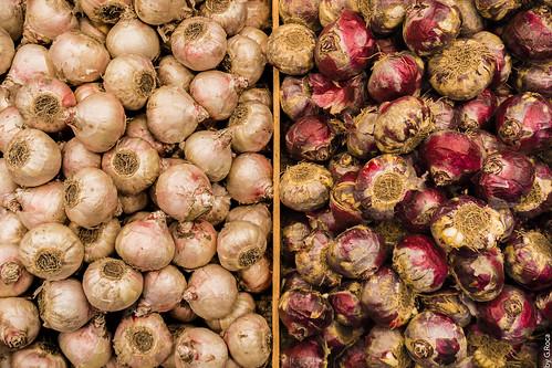 Onions in Street Market