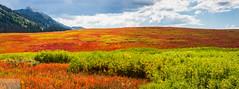 Togwotee Pass (Wycpl) Tags: togwoteepass bridegrtetonnationalforest fallcolors wyoming