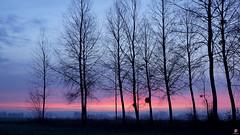 PAYSAGES DE PICARDIE 129 (aittouarsalain) Tags: landcape picardie paysage aurore aube levant jour arbres silhouette heurebleue