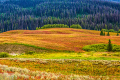 View from the Top (Wycpl) Tags: fallcolors togwoteepass wyoming bridgertetonnationalforest