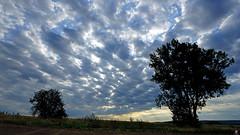 DSC09637 copie (aittouarsalain) Tags: picardie paysage landscape ciel nuages aurore levant aube arbres silhouette