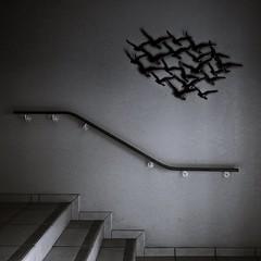 Garde-corps (Un jour en France) Tags: escalier gardecorps noiretblanc noiretblancfrance monochrome carré canoneos6dmarkii canonef1635mmf28liiusm