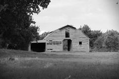 Old Horse Barn BW (Gene Ellison) Tags: barn wood abandoned unused field pasture blackwhitephotos bw fujifilm acros sooc