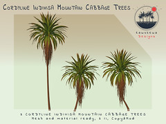 [Kawukewa Designs] Cordyline Indivisa Mountain Cabbage Tree (Kawukewa Designs) Tags: plant banana palm potted tropical landscaping landscape decor home raphia raffia california vegetation fern rock rocks boulder cordyline musa secondlife second life kawukewa garden