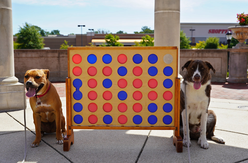 The World's Best Photos of game and pitbull - Flickr Hive Mind