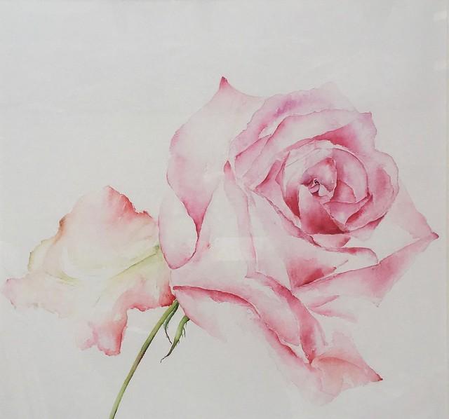 Robinson C 'Pink rose'