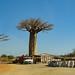 deforestation for sale