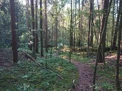 Piggtrådgjerde sti på Kykkelsrud (mtbboy1993) Tags: singletrack sti trail forest skog askim indreøstfold østfold kykkelsrud kykkelsrudveien norge norway