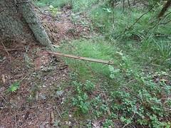 Piggtrådgjerde sti på Kykkelsrud (mtbboy1993) Tags: piggtrådgjerde barbwire singletrack sti trail forest skog askim indreøstfold østfold kykkelsrud kykkelsrudveien norge norway