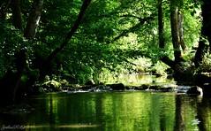 ~~ Un petit Ru bien frais ~~ (Joélisa) Tags: août2019 eau ru ruisseau ombres reflets meslières